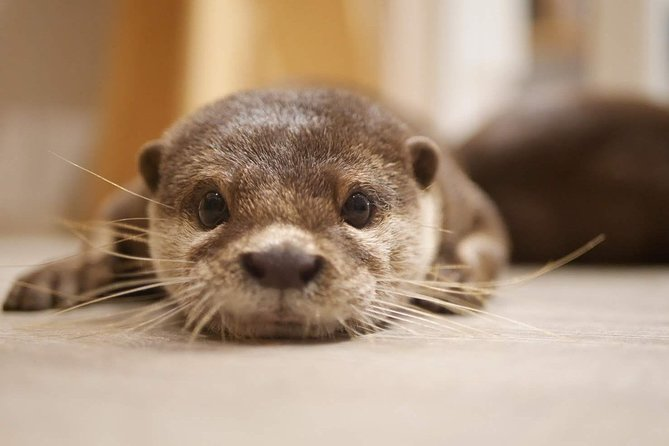 Meet with Cute Otters, Chinchillas and Hedgehogs in Harajuku photo 1