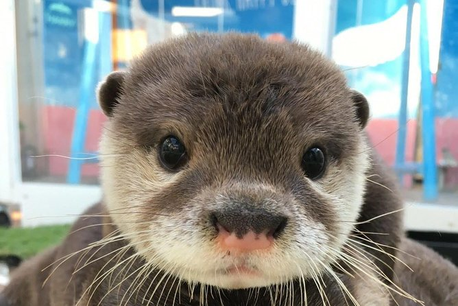 Meet with Cute Otters, Chinchillas and Hedgehogs in Harajuku photo 3