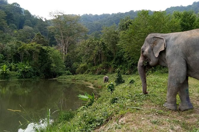 Phuket Elephant Park Ethical Tour with Lunch + Transfer photo 1
