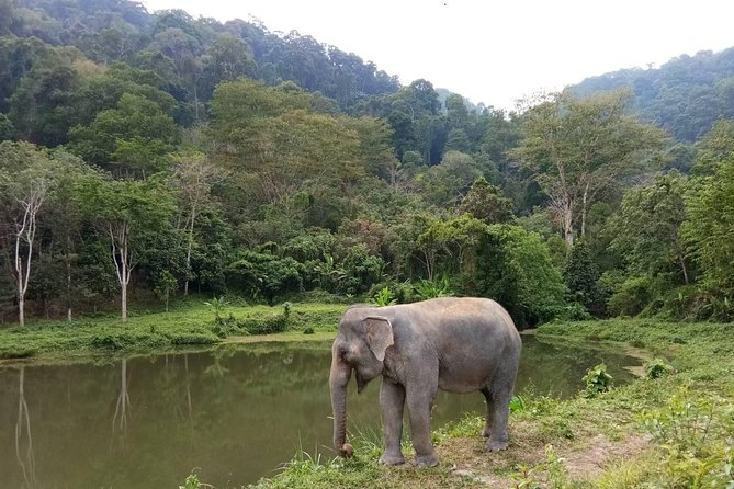 Phuket Elephant Park Ethical Tour with Lunch + Transfer photo 3