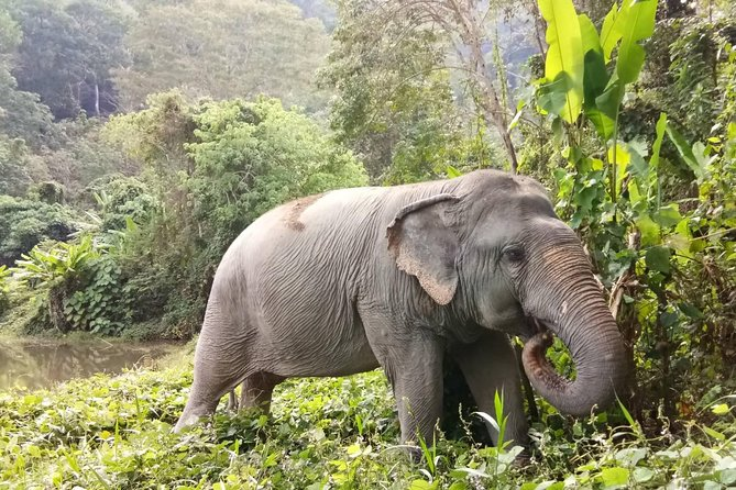 Phuket Elephant Park Ethical Tour with Lunch + Transfer photo 9