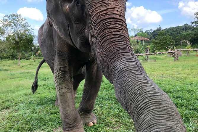 Phuket Elephant Park Ethical Tour with Lunch + Transfer photo 2