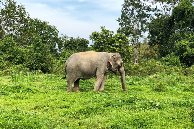 Phuket Elephant Park Ethical Tour with Lunch + Transfer photo 16