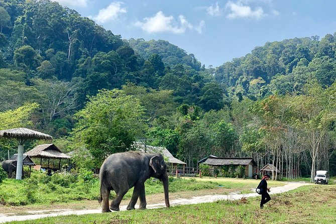 Phuket Elephant Park Ethical Tour with Lunch + Transfer photo 7