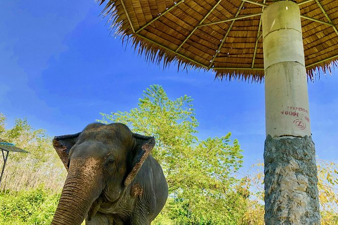 Phuket Elephant Park Ethical Tour with Lunch + Transfer photo 11