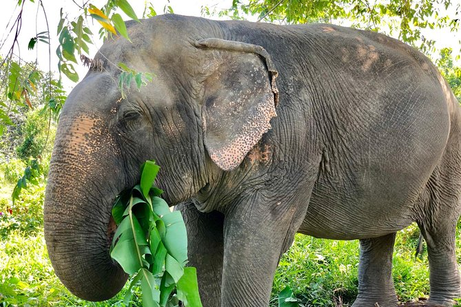 Phuket Elephant Park Ethical Tour with Lunch + Transfer photo 10