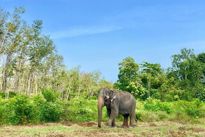 Phuket Elephant Park Ethical Tour with Lunch + Transfer photo 8