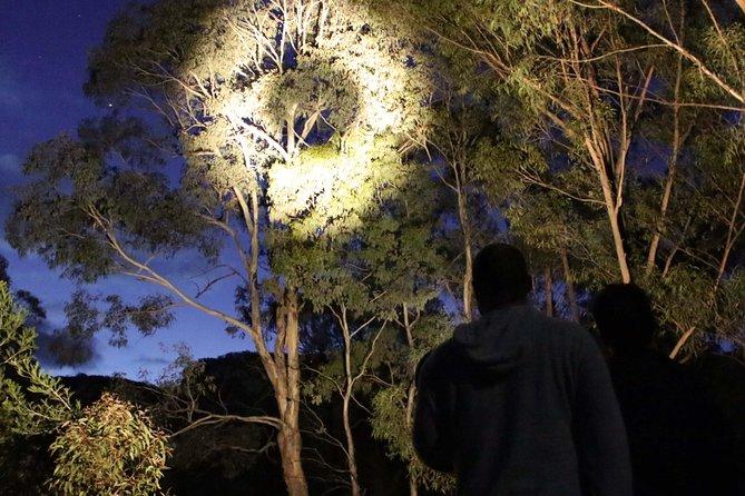 Wollemi Twilight Wildlife Tour