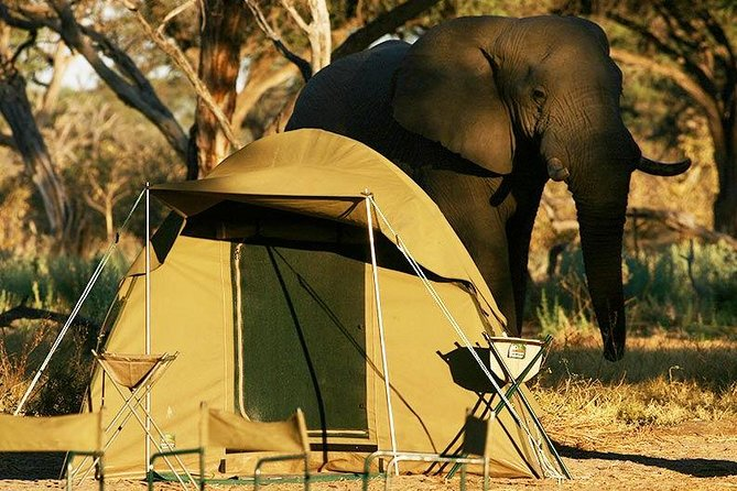 Chobe Camping 2day 1night photo 2