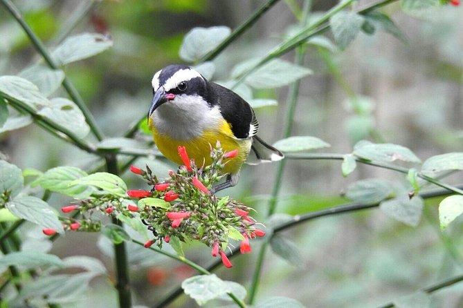 Birding in Arenal Volcano