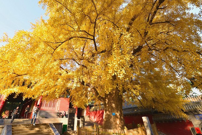 Private Tour to Zhongyue Temple, Shaolin Temple and Zen Music Ceremony from Luoyang photo 2