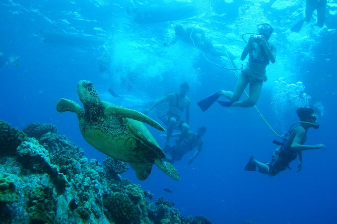 Molokini Crater and Turtle Town Snorkeling Tour from Ma'alaea Harbor