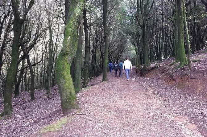 Cagliari: Is Cannoneris Nature Reserve Jeep and Walking Tour from Chia photo 9