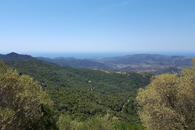 Cagliari: Is Cannoneris Nature Reserve Jeep and Walking Tour from Chia photo 26