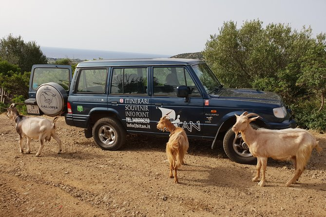 Cagliari: Is Cannoneris Nature Reserve Jeep and Walking Tour from Chia photo 43