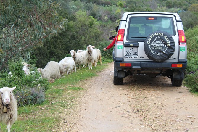 Cagliari: Is Cannoneris Nature Reserve Jeep and Walking Tour from Chia photo 30