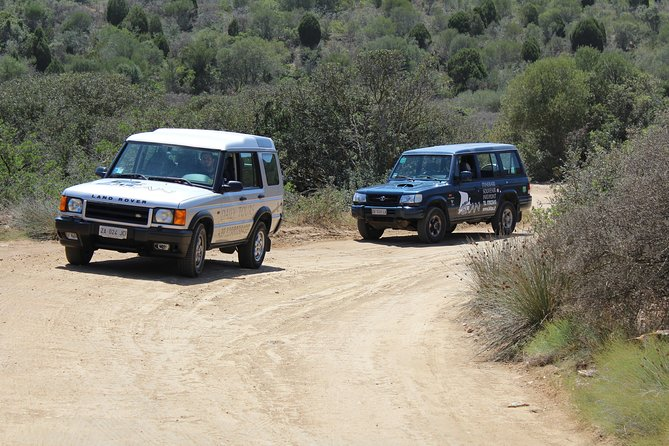 Cagliari: Is Cannoneris Nature Reserve Jeep and Walking Tour from Chia photo 11
