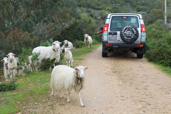Cagliari: Is Cannoneris Nature Reserve Jeep and Walking Tour from Chia photo 4