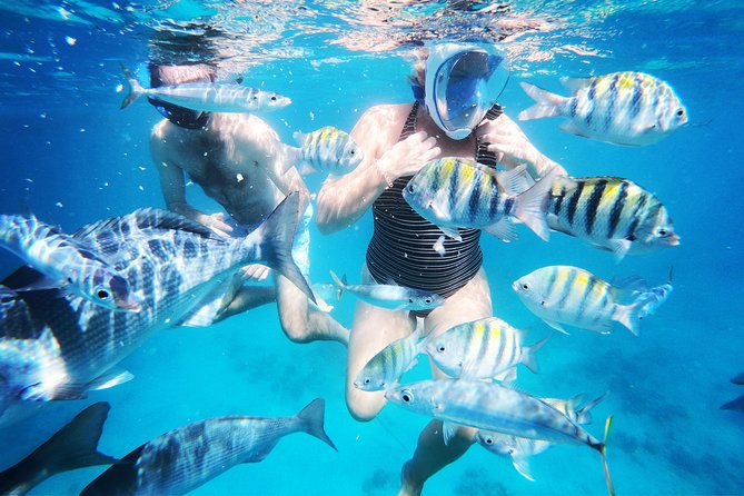 Barbados best snorkeling tours with complimentary photos by Hayden Browne