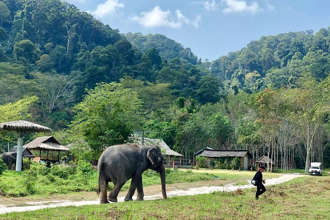 Phuket Elephant Park Ethical Tour
