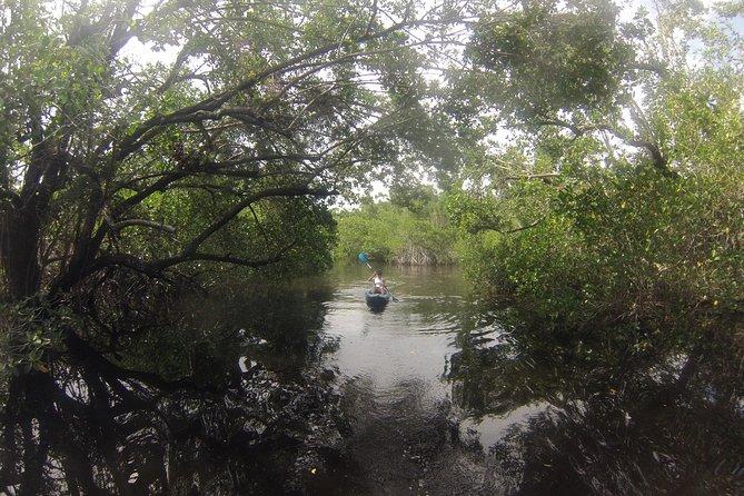 Naples Paddleboard inc, Kayak or Paddleboard Mangrove forest tour