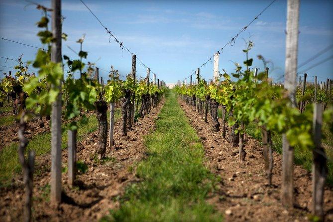 Excursão de vinho a Saint-Émilion com visitas e degustações