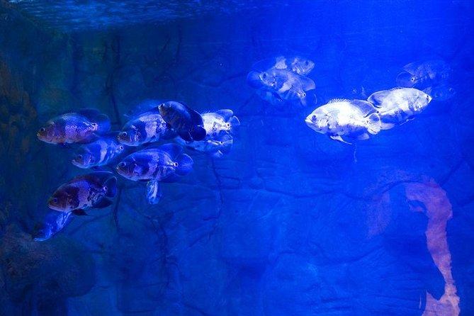 Grand Aquarium Hughada