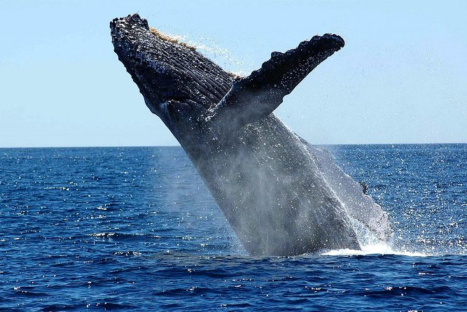 Whale Watching - Live The Colombian Pacific
