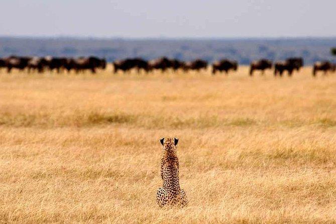 3 Days Tarangire Ngorongoro Crater Lake Manyara