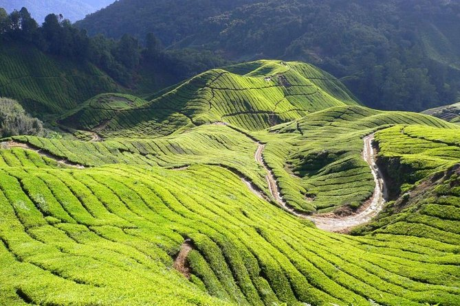 Full-Day Cameron Highlands Nature Tour (Private) photo 6