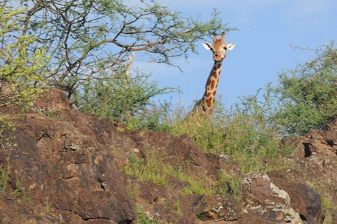 2-Day Bird Watching Safari at Lake Baringo & Bogoria