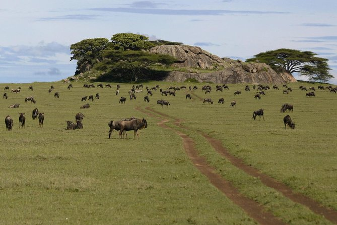 3 Days Join Group Trip To Serengeti And Ngorongoro photo 7