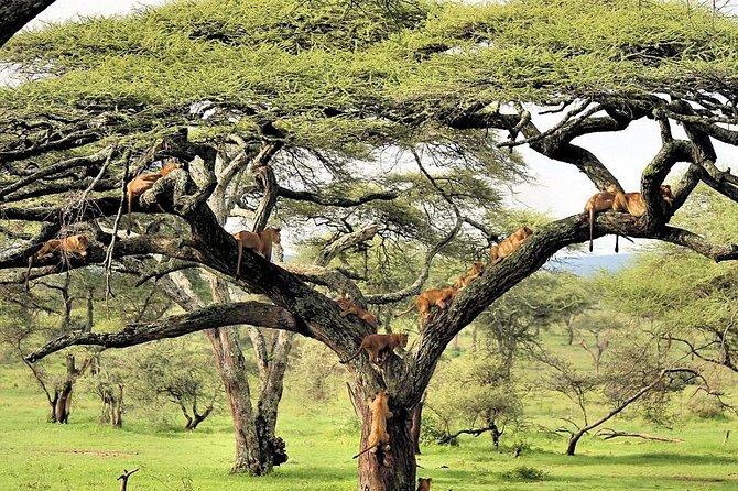 6 Day Luxury Lodge Safari : Northern Tanzania