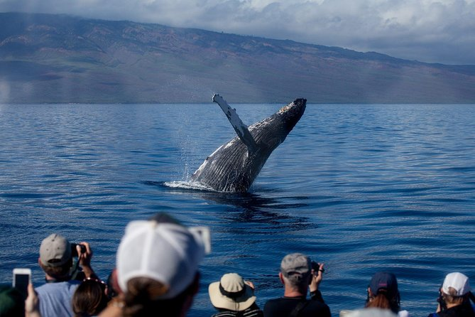 Whale Watching from Lahaina Harbor photo 1