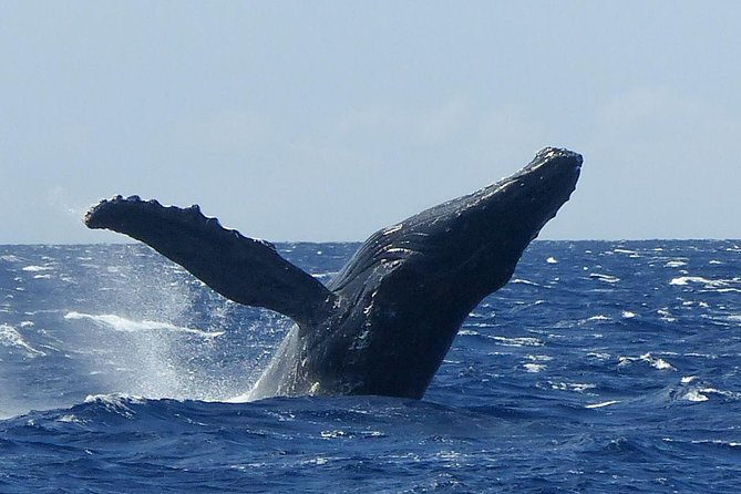Whalewatch Deluxe Tour from Ma'alaea Harbor