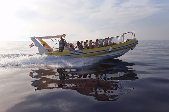Afternoon Sea Safari