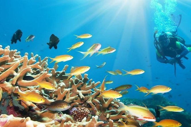 Day Scuba Diving From Marsaalam