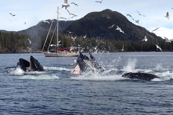 Sitka Shore Excursion: Alaskan Wildlife by Land and Sea