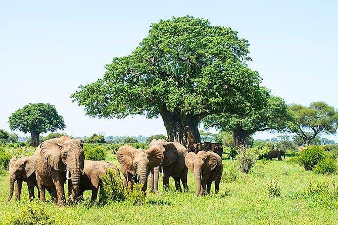 4 Days, 3 Nights Safari, Tarangire, Serengeti National Park, Ngorongoro Crater