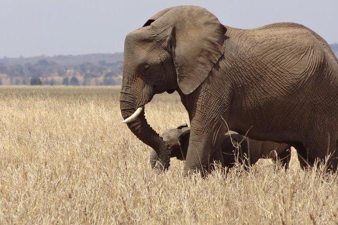 5 Days Tusker Experience in Tanzania