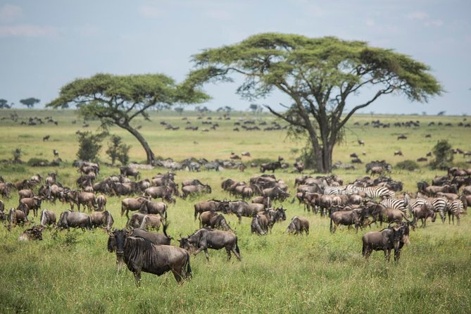 4 Days group joining budget safari to Maasai Mara only