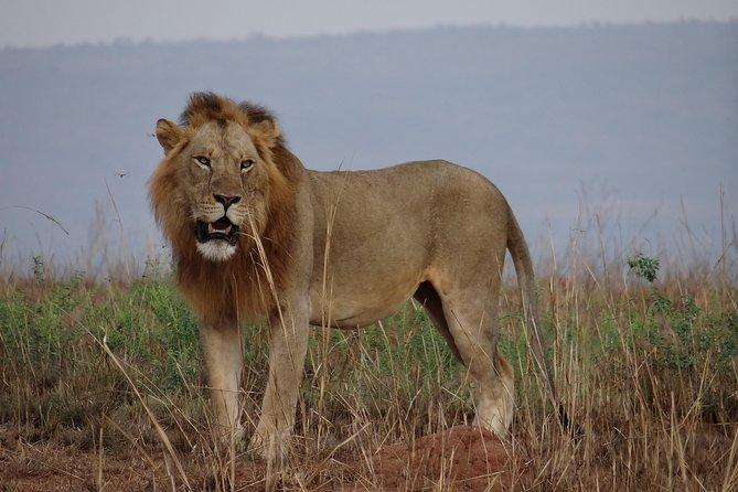 3 Days Murchison Falls National park Safari Holiday Tour