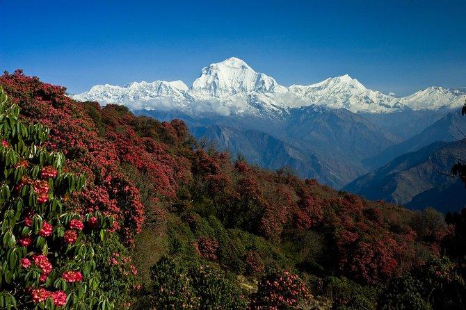 Annapurna View Short Trek