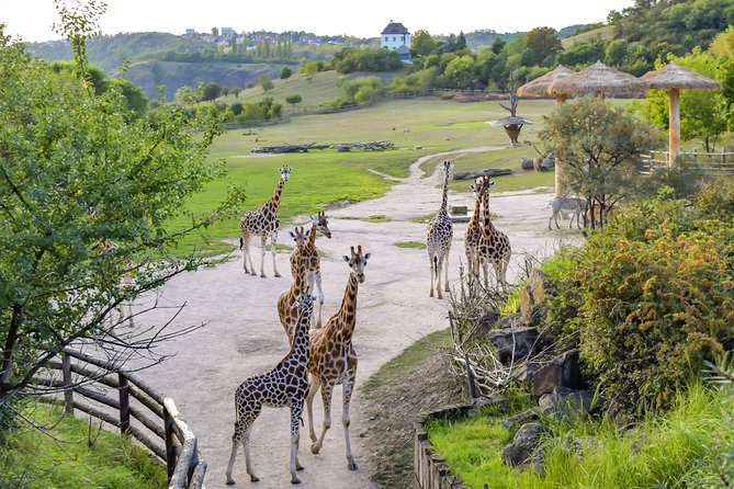 ZOO Prague by boat photo 7