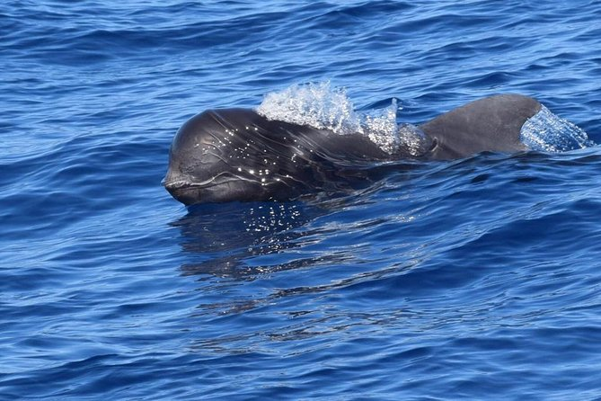 Whale and Dolphin Watching Private Motor Boat Full Day Charter