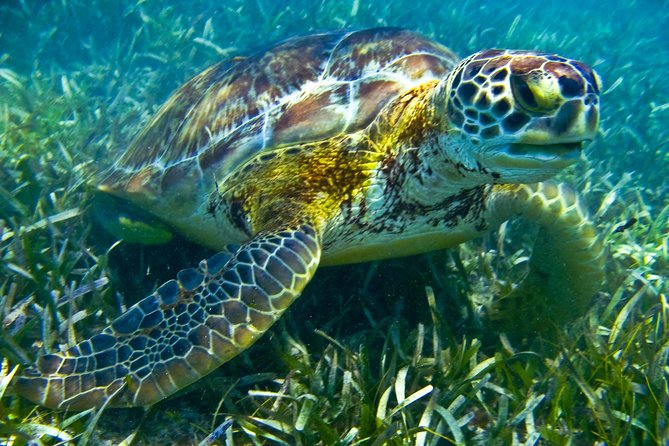 Half day tour - sea turtle and four cenotes - snorkeling from Riviera Maya. photo 11