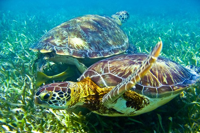 Half day tour - sea turtle and four cenotes - snorkeling from Riviera Maya. photo 7