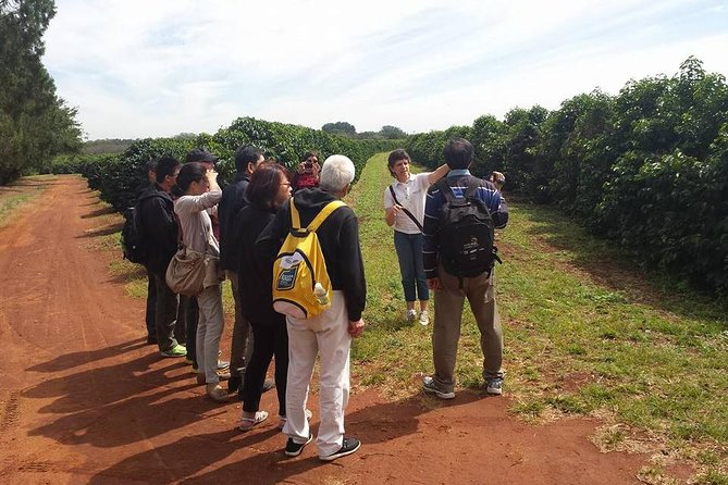 Private 7-hour Coffee Plantation Tour from Sao Paulo