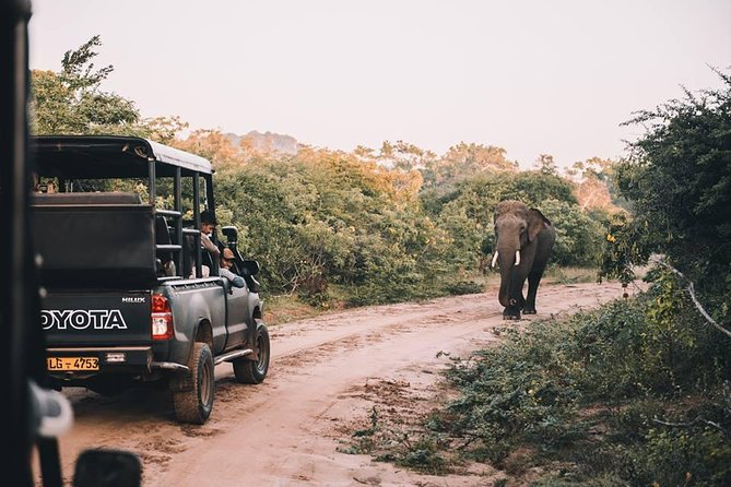 From Colombo: Udawalawa National Park Wildlife Safari