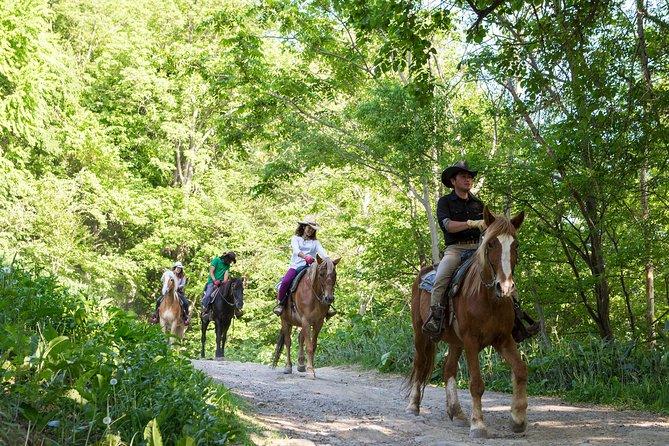 Cavalgar em um lado do país em Sapporo - Transfer privado está incluído